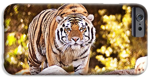 Mike The Tiger iPhone Cases - On the Prowl iPhone Case by Scott Pellegrin