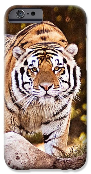 On the Prowl iPhone Case by Scott Pellegrin