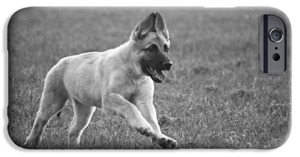 Dog Photograph Canvas iPhone Cases - On the Run iPhone Case by Chris Whittle
