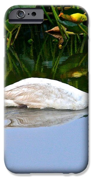 On the Swanny River iPhone Case by Frozen in Time Fine Art Photography