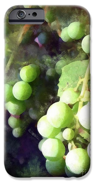 On The Vine iPhone Case by Todd A Blanchard