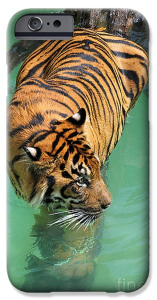 Animals Photos iPhone Cases - On The Water iPhone Case by Dan Holm