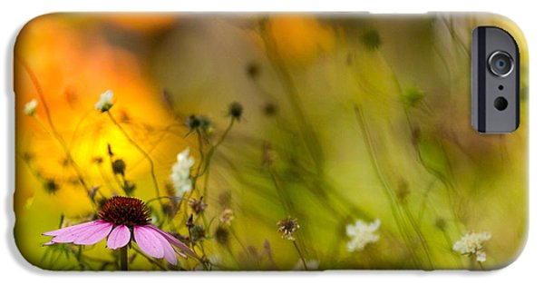 Cone Flower iPhone Cases - Once Upon a Time There Lived a Flower iPhone Case by Mary Amerman