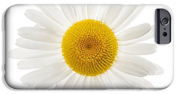 Daisy Photographs iPhone Cases - One daisy flower iPhone Case by Elena Elisseeva