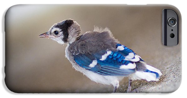 Baby Bird iPhone Cases - one day...I will fly iPhone Case by Shane Holsclaw