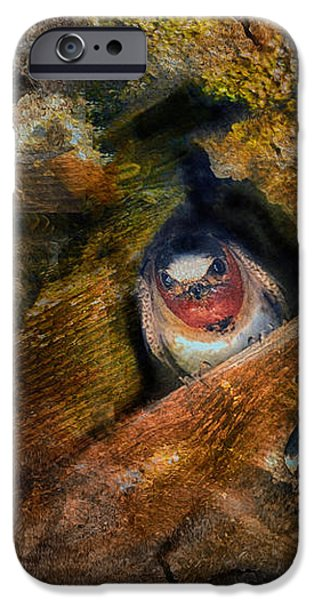 One for the Money iPhone Case by Patricia Dennis