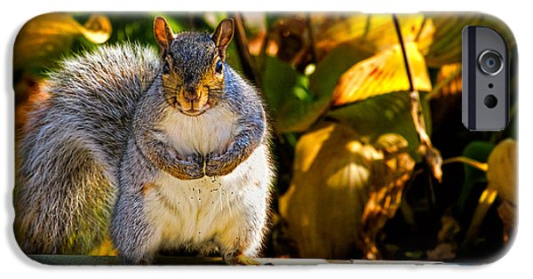 One Photographs iPhone Cases - One Gray Squirrel iPhone Case by Bob Orsillo