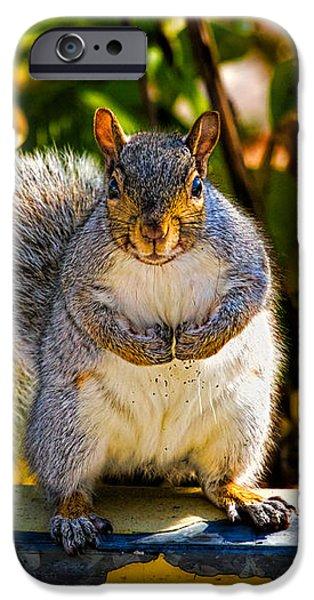 One Gray Squirrel iPhone Case by Bob Orsillo