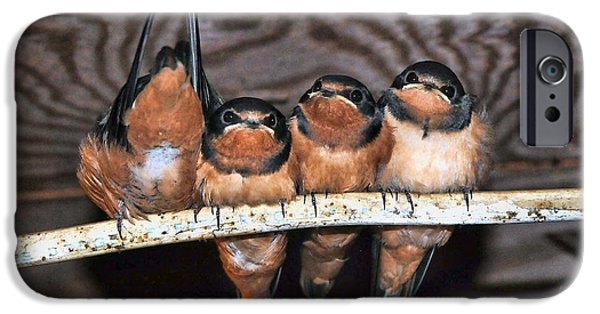 Barn Swallow iPhone Cases - One in every crowd iPhone Case by Fran J Scott