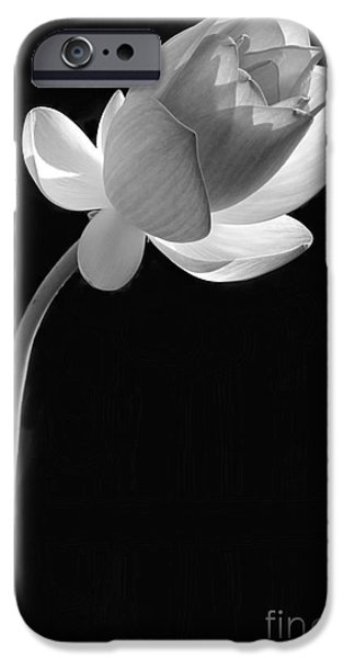 Florida Flowers Photographs iPhone Cases - One Lotus Bud iPhone Case by Sabrina L Ryan