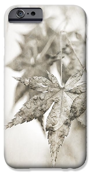 Fog Mist iPhone Cases - One Misty Moisty Morning iPhone Case by Caitlyn  Grasso