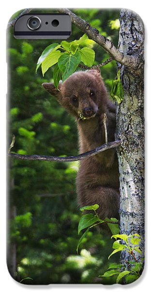 Bear Cub iPhone Cases - One of Three iPhone Case by Mark Kiver