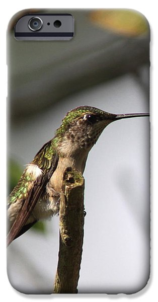Baby Bird iPhone Cases - One Out of Place - Hummingbird iPhone Case by Travis Truelove