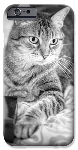 American Shorthair iPhone Cases - One Paw iPhone Case by Anita Miller