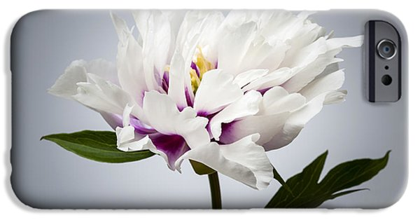 Close Up Floral iPhone Cases - One peony flower iPhone Case by Elena Elisseeva