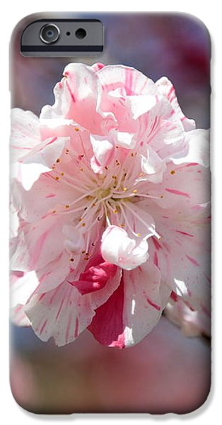 One Pink Blossom iPhone Case by Carol Groenen