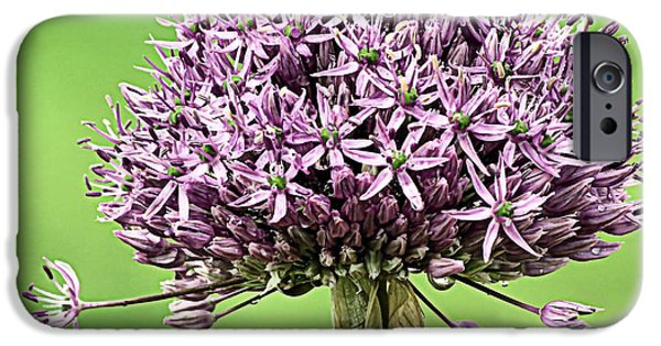 Purple Sensation iPhone Cases - One Purple Sensation Allium iPhone Case by Janice Drew