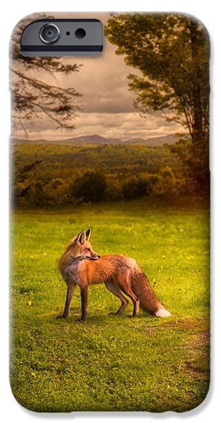One Red Fox iPhone Case by Bob Orsillo