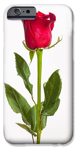 Nature Study iPhone Cases - One Red Rose iPhone Case by Adam Romanowicz