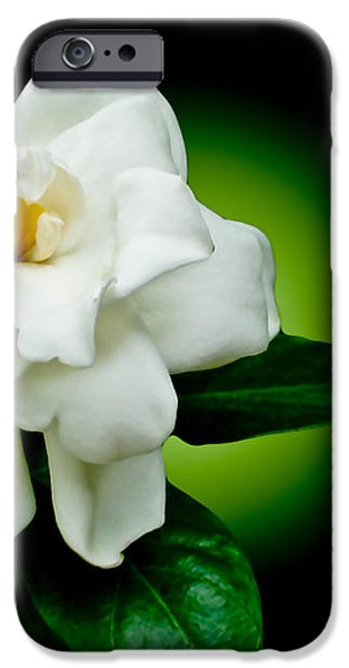 One Sensual White Flower iPhone Case by Carol F Austin