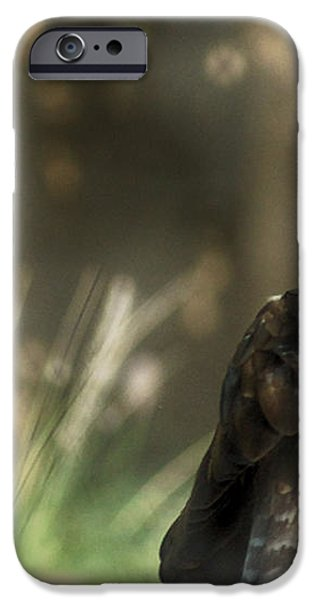 Only an eagle can be as sharp as an eagle iPhone Case by Munir El Kadi