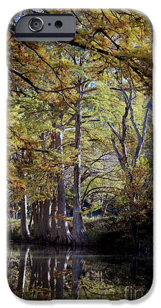 Warner Park iPhone Cases - OOOO Fall iPhone Case by Laurette Escobar