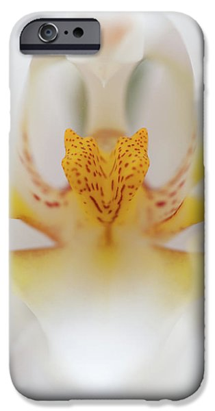 White Orchid iPhone Cases - Open Wide iPhone Case by Sebastian Musial