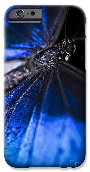 Antenna iPhone Cases - Open wings of Blue Morpho butterfly iPhone Case by Elena Elisseeva