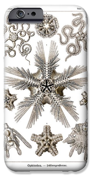 Serpent iPhone Cases - Ophiodea iPhone Case by Ernst Haeckel