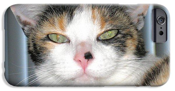 Opie iPhone Cases - Opie The Calico Cat iPhone Case by Oksana Semenchenko