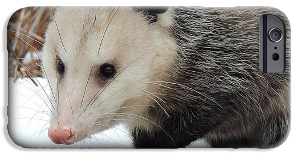 Snow iPhone Cases - Opossum in the Snow iPhone Case by Jamie K Reaser