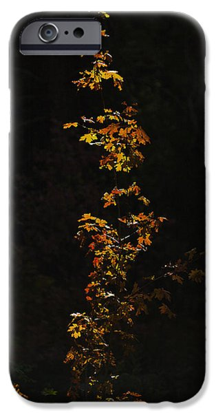 Fall iPhone Cases - Orange and Red iPhone Case by Scott Moss