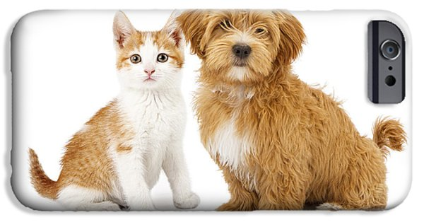 Composite iPhone Cases - Orange and White Puppy and Kitten iPhone Case by Susan  Schmitz