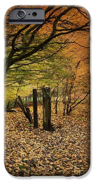 Speculation iPhone Cases - Orange Autumn iPhone Case by David Tinsley