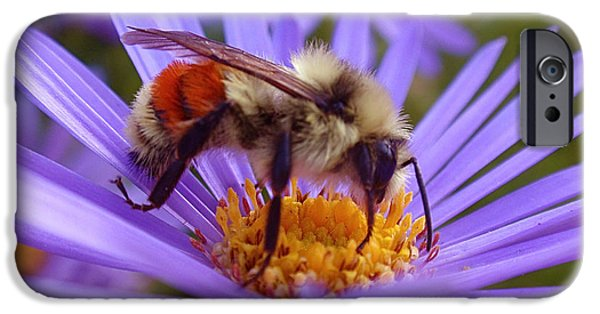 Insect iPhone Cases - Orange-banded Bee iPhone Case by Rona Black
