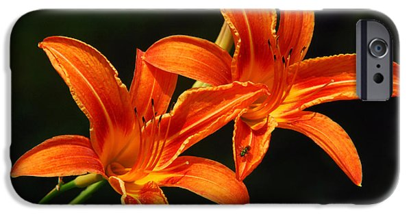 Day Lilies iPhone Cases - Orange Blossom iPhone Case by Christina Rollo