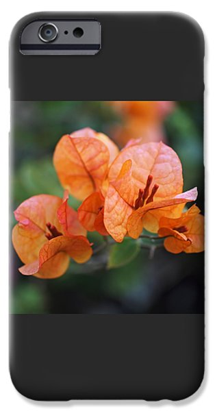 Orange Bougainvillea iPhone Case by Rona Black