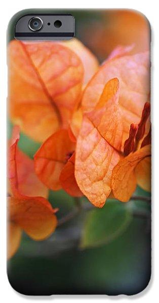 Orange Bougainvillea iPhone Case by Rona Black