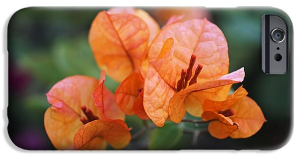 Recently Sold -  - Flora iPhone Cases - Orange Bougainvillea iPhone Case by Rona Black