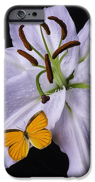 White Tiger iPhone Cases - Orange Butterfly On Lily iPhone Case by Garry Gay