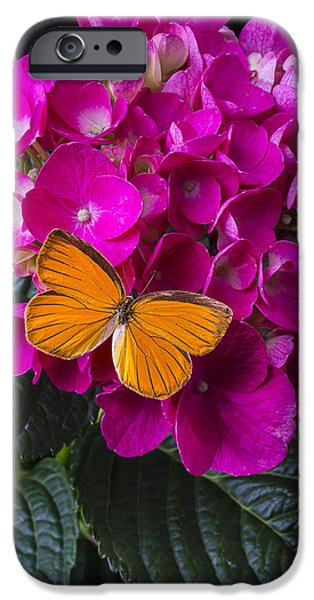 Insects Photographs iPhone Cases - Orange Butterfly Resting iPhone Case by Garry Gay