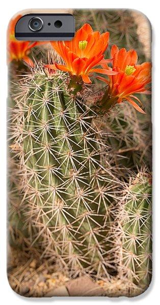 Cactus Southwest Cactus Flower Orange Wildflowers Nature Arizona iPhone Cases - Orange Cacti iPhone Case by Nicholas  Pappagallo Jr