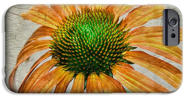 Cone Flower iPhone Cases - Orange Crackle iPhone Case by Deborah Benoit