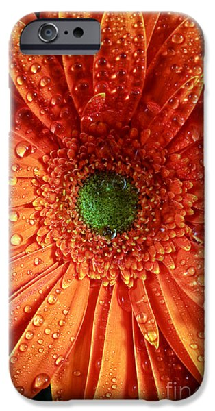Drops Of Water iPhone Cases - Orange Daisy iPhone Case by John Rizzuto