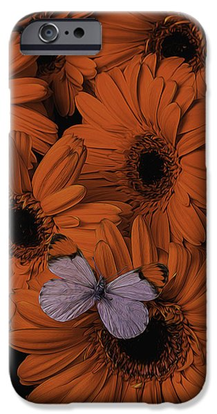 Insects Photographs iPhone Cases - Orange Daisy With Butterfly iPhone Case by Garry Gay