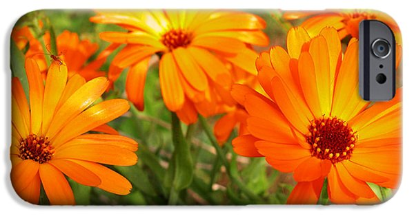 Orange iPhone Cases - Orange Flowers iPhone Case by Thomas R Fletcher
