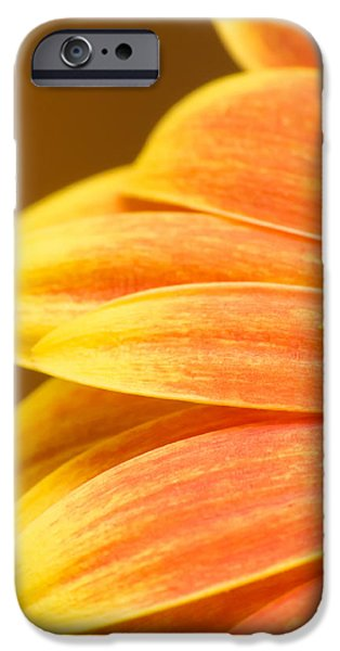 Close Up Floral iPhone Cases - Orange Gerbera iPhone Case by Wim Lanclus