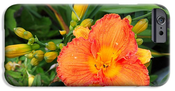 Gladiolas iPhone Cases - Orange Gladiola Flower and Buds iPhone Case by Corey Ford