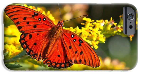 Buterfly iPhone Cases - Orange Gulf Fritillary iPhone Case by Adam Jewell