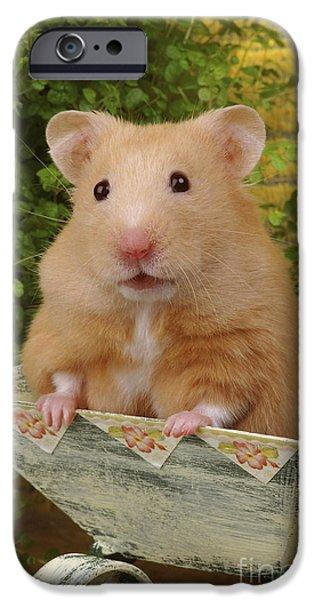 Greg Cuddiford Digital iPhone Cases - Orange Hamster HA106 iPhone Case by Greg Cuddiford